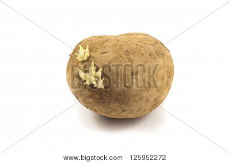 big potato with sprouts isolated on white background