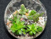 Table top indoor decorative miniature garden in clear glass bubble with cactuses and succulents. Decorative glass vase with succulent and cactus plants. Glass interior terrarium with succulents and cactuses. Top view. poster