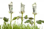 Financial growth.Conceptual image. poster