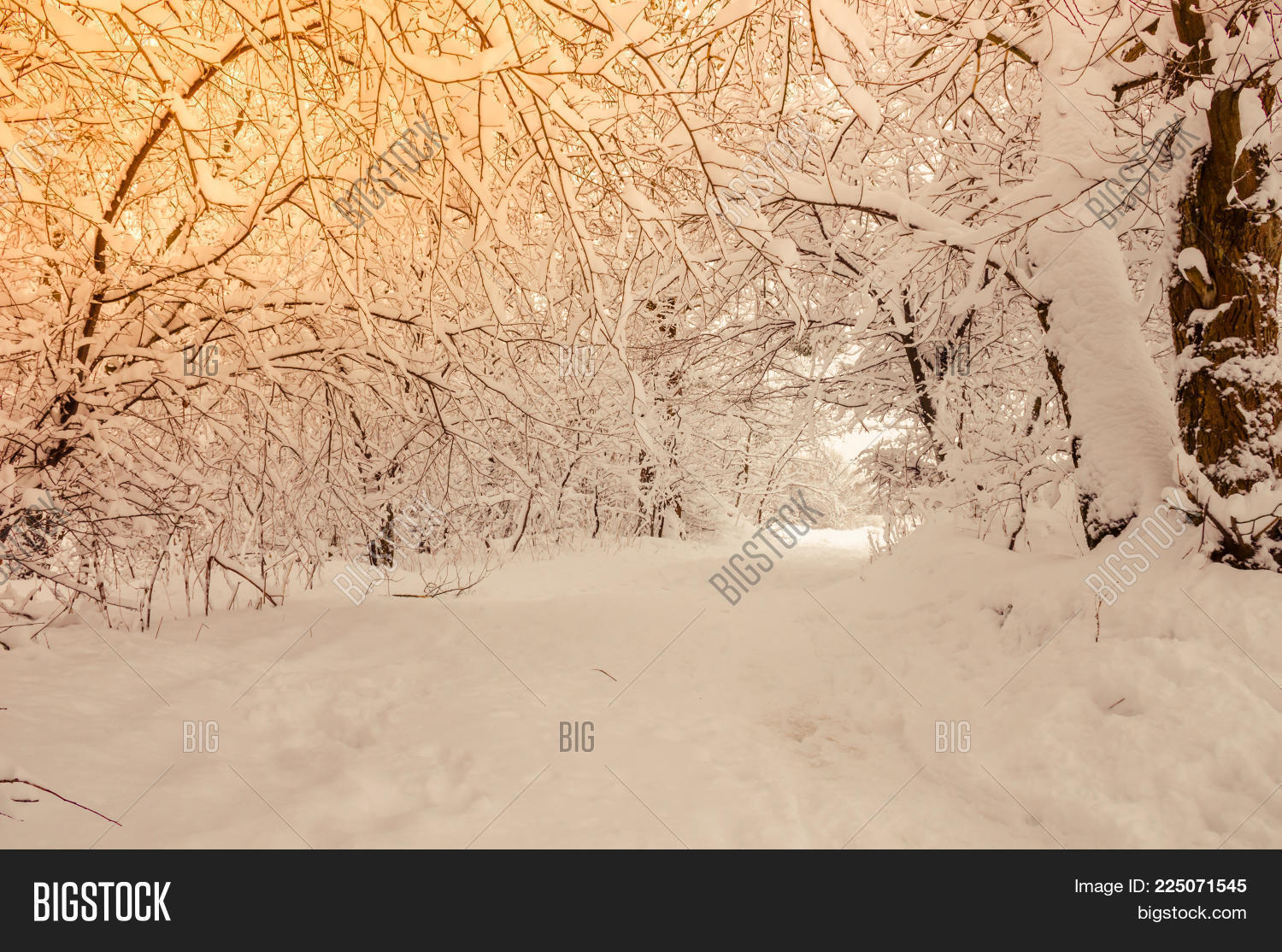 Beautiful Winter City Park Powerpoint Template Beautiful Winter