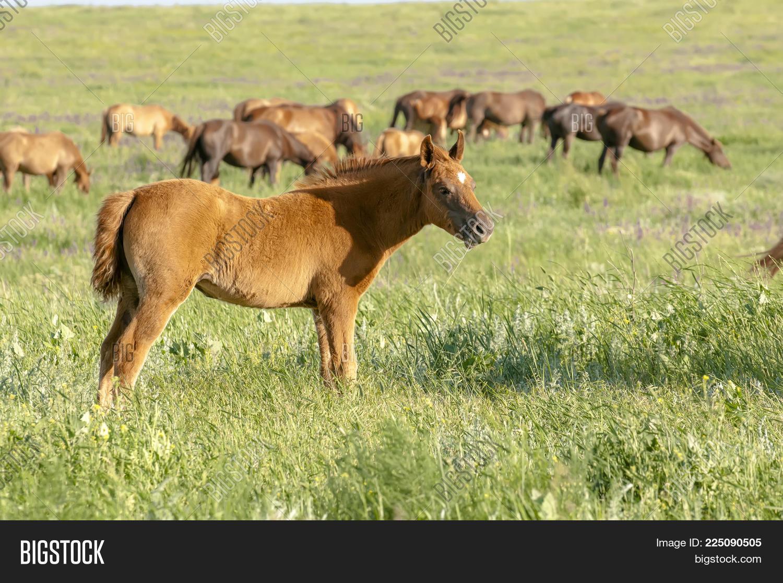 Atmospheric Meadow Portrait Horse Powerpoint Template Atmospheric