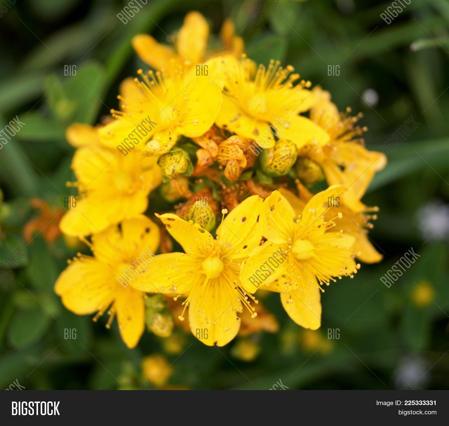 Bright Yellow Flowers Powerpoint Template Bright Yellow Flowers