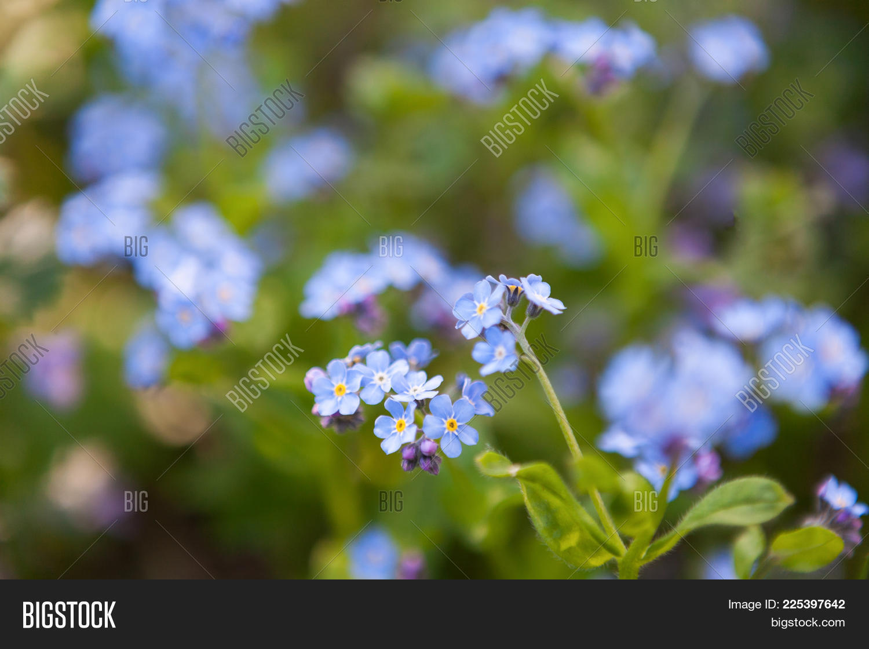 Tender Tiny Blue Image Photo Free Trial Bigstock