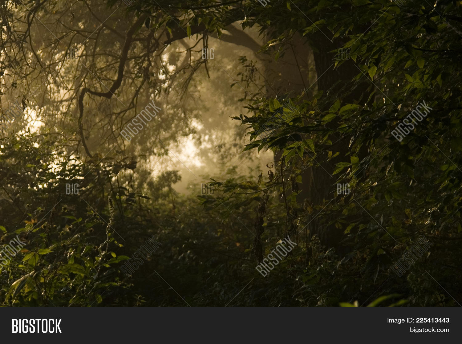 light in jungle powerpoint template light in jungle powerpoint