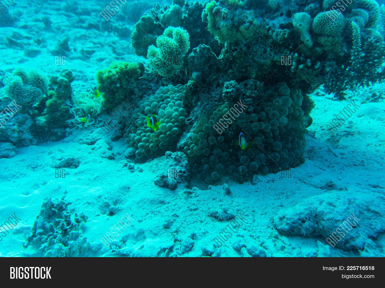 Underwater red sea coral powerpoint template underwater red sea y toneelgroepblik Choice Image