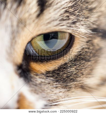 Extreme close-up of green cat's eye. . In the park in nature