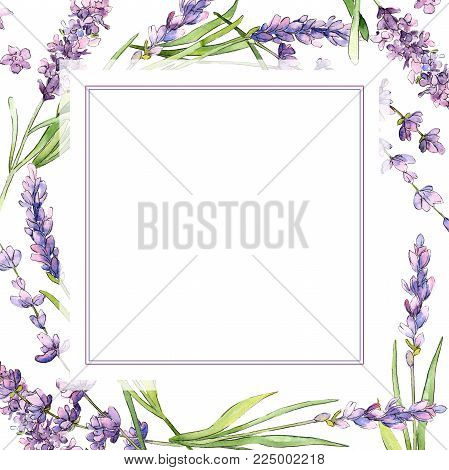 Wildflower lavender flower frame in a watercolor style. Full name of the plant: lavender. Aquarelle wild flower for background, texture, wrapper pattern, frame or border.