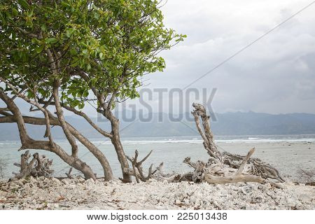 Tropical Beach With Trees With No People