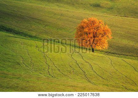 Autumn landscape with a beautiful deciduous tree.