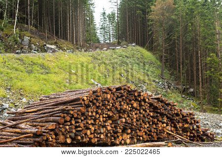 Log stacks along the forest road, Norway, Europe