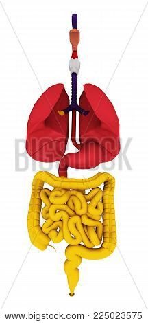 Computer generated 3D illustration with a digestive tract isolated on white background