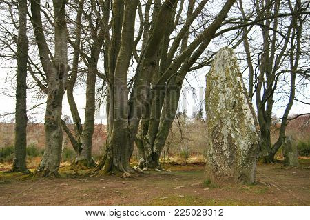 Standing stone in wooded area at Clava Cairns, Inverness