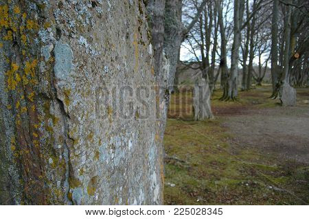 Standing stones in woodland at Clava Cairns, Inverness