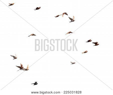 doves on a white background . In the park in nature