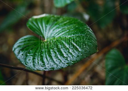 Green fresh wet drop on left tropical plant in botany garden