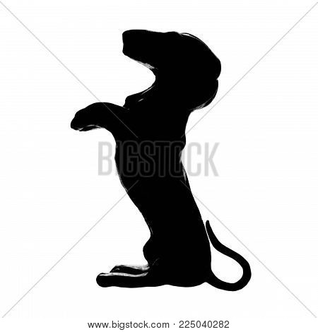 Dachshund badger dog breed, isolated pedigree silhouette,large detailed black macro closeup, kennel club concept cutout