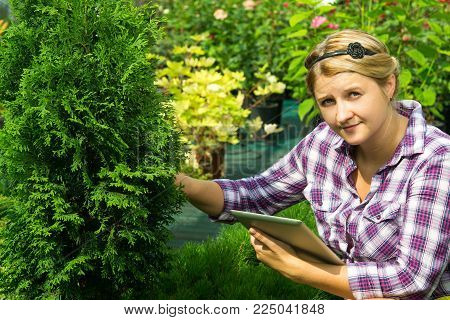 girl gardener in the greenhouse examines the coniferous tree