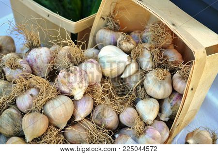 Small Garlic Bulbs For Sale In Baskets