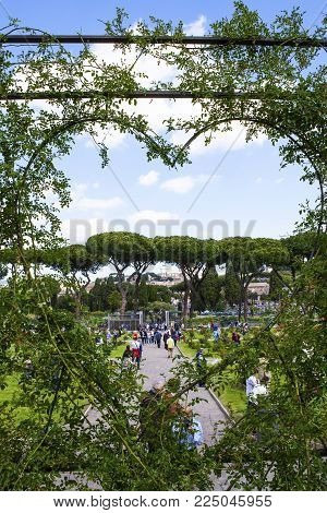 Rome, Italy - 22 April 2017 : The Famous Municipal Rose Garden On The Aventino Hill In The Center Of