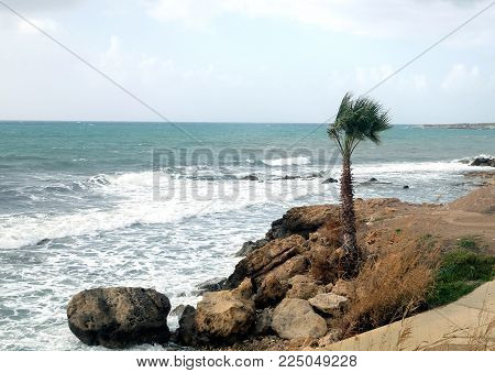 Landscape with alone palm tree growing on stony coast infront a stormy sea with waves break about the empty wild beach against the cloudy sky on overcast windy day