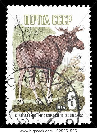 SOVIET UNION - CIRCA 1964 : Cancelled postage stamp printed by Soviet Union, that shows Elk, circa 1964.