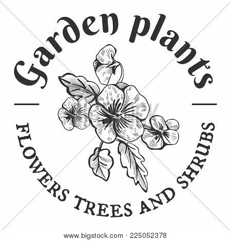 Vector vintage emblem. Garden plants, flowers, trees and shrubs. Pansy bush hand drawn object.