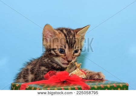 Beautiful bengal kitten is revealing his New Year's gif. Pet animals. Traditional holidays.