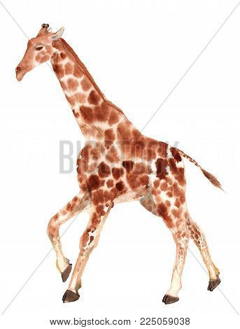 Watercolor image of running giraffe on white background