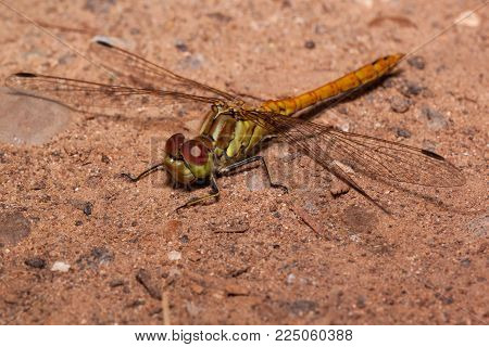 Beautiful dragonfly with transparent wings is sitting on a sand. Animals in wildlife.