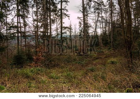 Ground of the forest and high trees