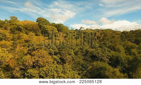 Rainforest, jungle covered with green vegetation and trees on the tropical island, landscape. Aerial view: Mountains and hills with wild forest. Hillside rainforest and jungle. Philippines, Siargao.