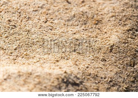 sawdust as background . Photo of an abstract texture