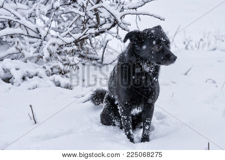 Black mixed-breed stray dog sitting on a fresh snow