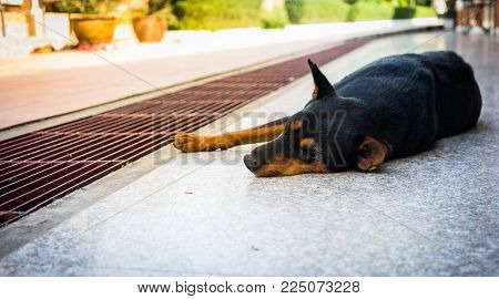 The cute black dog is thinking something and lying down on the floor near drainage gutter with blurred background, selective focus.