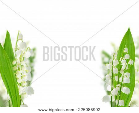 Lilly of the valley flowers and leaves over white background