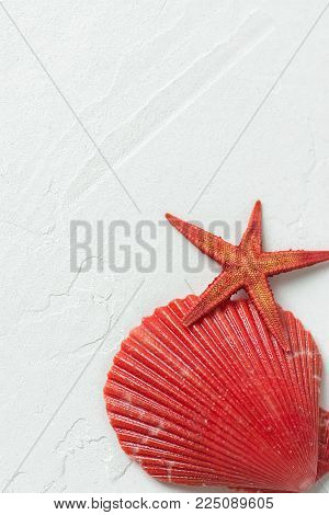 Red Flat Semi Circle Sea Shell Star Fish On White Stone Background. Minimalist Modern Styled Stock P