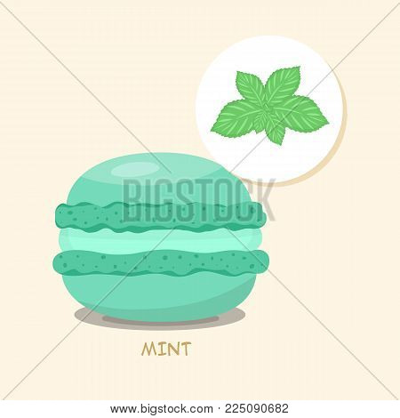 Macaroon with Mint taste, flavor and filling. Green macaroon with title. Tasty cake for your menu or poster. Template for your design. Vector illustration art