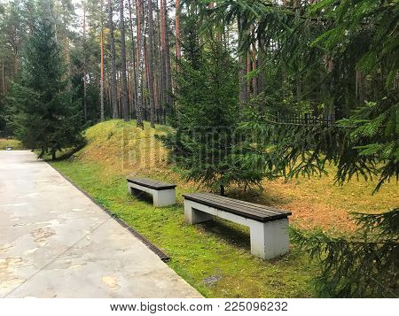 Benches in the Park. Stone benches with wooden seats in the Park, everywhere coniferous green trees.