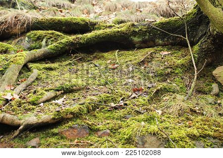 a view of a mossy place in the forest
