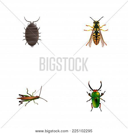Set of insect realistic symbols with grasshopper, sting, beetle and other icons for your web mobile app logo design.