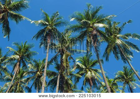 Coco palm tree tropical landscape. Palm skyscape vibrant toned photo. Exotic island vacation banner template with text place. Palm tree and blue sky background. Tropic greenery. Palm leaf backdrop
