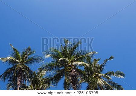 Coco palm tree tropical landscape. Tropical holiday hot day photo. Exotic island vacation banner template with text place. Tropical palm tree and blue sky background. Coconut palm leaf backdrop