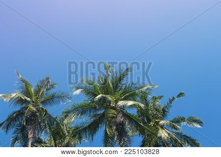Coco palm tree tropical landscape. Tropical escape destination photo. Exotic island vacation banner template with text place. Palm tree and blue sky background. Tropic greenery. Palm leaf backdrop