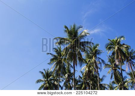 Coco palm tree tropical landscape. Tropical nature toned photo. Exotic island vacation banner template with text place. Tropical palm tree and blue sky background. Tropic greenery. Palm leaf backdrop
