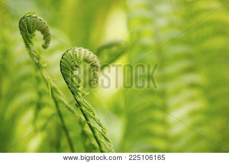 Green fern in detail as a background in the summertime
