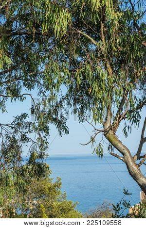 The Sea Viewed Through The Gap Between The Trees In Malaga, Spain, Europe On A Bright Summer Day
