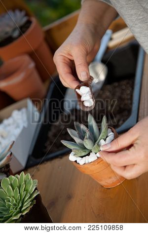 Decorating Succulent Pots