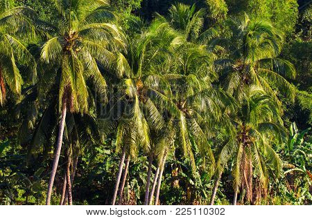 Jungle forest tropical landscape. Tropical green jungle view. Summer travel landscape with coco palm trees. Relaxing tropical landscape. Hiking in tropical jungle forest. Exotic island wild nature