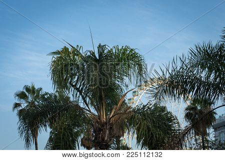 The Top Of A Plam Tree Against A Blue Sky Background In Malaga, Spain, Europe