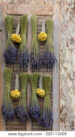Dried Lavender And Dried Straw Flowers Hanging Upside Down On A Wooden Shutter. A Plane Tree Is On T